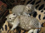 Очаровательные плюшевые котята