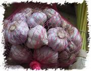 Продажа семян чеснока